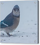 I Hate Snow In My Seeds Acrylic Print