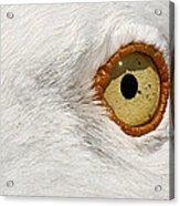 I Have My Eye On You Acrylic Print