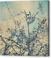 I Hope Spring Will Be Kind Acrylic Print