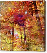 I Love You Truly-featured In Nature Photography- Cards For All Occasions-nature Wildlife Group Acrylic Print