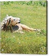 I Need A Tan  Horse Acrylic Print