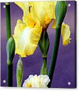 I Only Have Iris For You Acrylic Print by Kathy  White