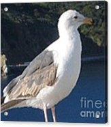 I Posed For You Now Feed Me Please Acrylic Print