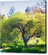 I See Soul And Expression - Julian California Oakscape Acrylic Print