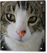 I See You Cat - Square Acrylic Print