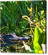 I See You Acrylic Print by Frank Feliciano