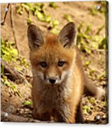 I See You Acrylic Print by Thomas Young
