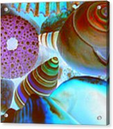 I Sell Seashells Down By The Seashore Acrylic Print