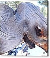 I Spy An Elephant Acrylic Print