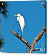 I Stand Alone Acrylic Print