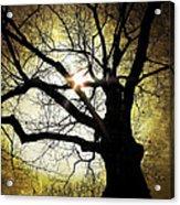 I Think I Shall Never See A Poem As Lovely As A Tree... Acrylic Print