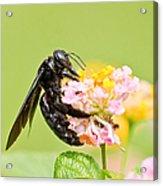 I Want Pollen Acrylic Print