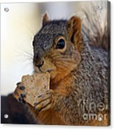 I Would Like A Wheat Thin...please Acrylic Print