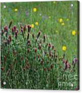 I55 Eye Candy Acrylic Print