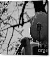Ibis Stare Down Acrylic Print