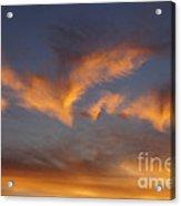 Icarus's Wings Acrylic Print