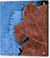 Ice And Life Acrylic Print