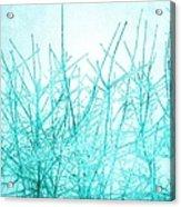 Ice Branches Acrylic Print