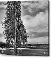 Ice Coated Tree Acrylic Print