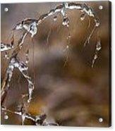 Ice Crystals 1 Acrylic Print