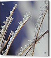 Ice Crystals On Fireweed Fairbanks  Alaska By Pat Hathaway 1969 Acrylic Print