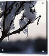 Ice Drop Acrylic Print