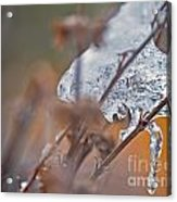 Ice Drop Acrylic Print