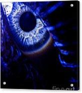 Ice Eye Acrylic Print