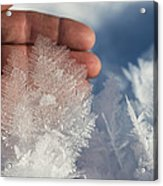 Ice Feathers Acrylic Print