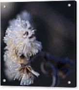 Ice Flowers Acrylic Print