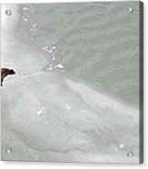 Ice Goose Acrylic Print