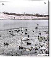 Ice Lake Acrylic Print