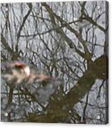 Ice Reflections 3 Acrylic Print