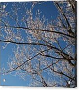 Ice Storm Branches Acrylic Print