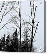 Ice Storm Poplars Acrylic Print