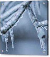 Ice Tree  Acrylic Print