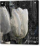 Ice Tulip  Acrylic Print
