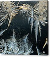 Ice Wings Acrylic Print