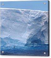 Iceberg With Cape Petrel Acrylic Print