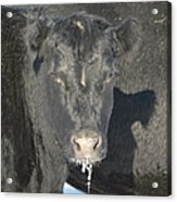 Iced Beef Acrylic Print by Bonfire Photography