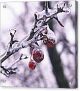 Iced Berries Acrylic Print