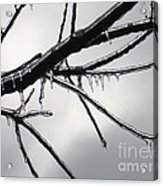 Iced Tree Acrylic Print