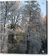 Iced Trees Acrylic Print