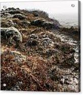 Iceland Barren Landscape Acrylic Print by Francesco Emanuele Carucci