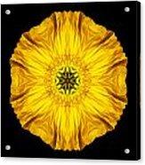 Iceland Poppy Flower Mandala Acrylic Print by David J Bookbinder