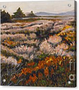 Iceplant And Chaparral Acrylic Print
