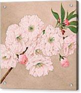 Ichi-yo - Single Leaf - Vintage Japan Watercolor Acrylic Print
