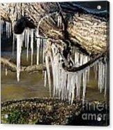 Icicles Hang From Tree Limb Acrylic Print