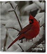 Iconic Avian Acrylic Print