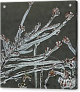 Icy Branch-7474 Acrylic Print
